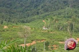 78.000 Hektare Hutan Sulbar Beralih Fungsi