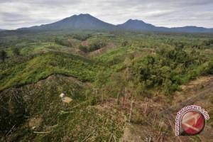 17.000 Hektare Kawasan Hutan Di Palu Kritis