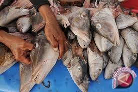 Harga Ikan Laut Di Palu Tembus Rp40ribu/ekor