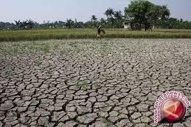 Kemarau Masih Landa Sejumlah Wilayah Sulteng