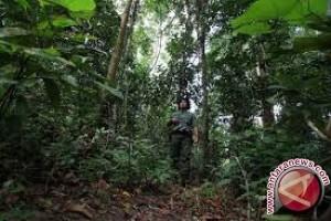Pemprov Sulteng Promosikan Wisata Tahura Ngatabaru