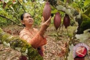 Disbunnak Sulteng Petakan Masalah Perkebunan
