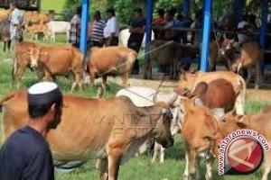 Pemprov Sulteng awasi tempat penyembelihan hewan kurban