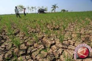 Kadis Kritik Kementerian Pertanian Atas Pencetakan Sawah