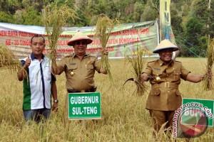 Gubernur: Parigi Moutong harus tingkatkan produksi beras