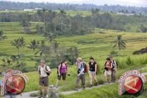 Pertanian Sumbang 40 Persen Pada PDRB  Sulteng