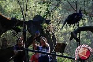 Parimo Targetkan 5.000 Kunjungan Wisman 2017