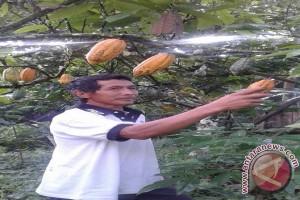 Program Intensifikasi Tingkatkan Produksi Petani Sigi