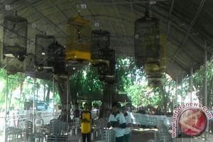 300 Burung Ramaikan Lomba Burung Berkicau