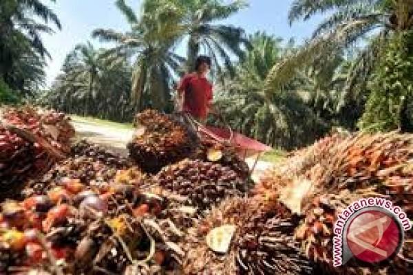 Indonesia Perlu Bentuk Kelembagaan Nasional Sawit