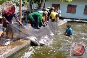 Pemkot Ajak Masyarakat Budidaya Ikan Air Tawar