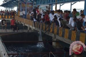 MAI: Budidaya Bandeng Laut Perlu Jadi Gerakan Nasional