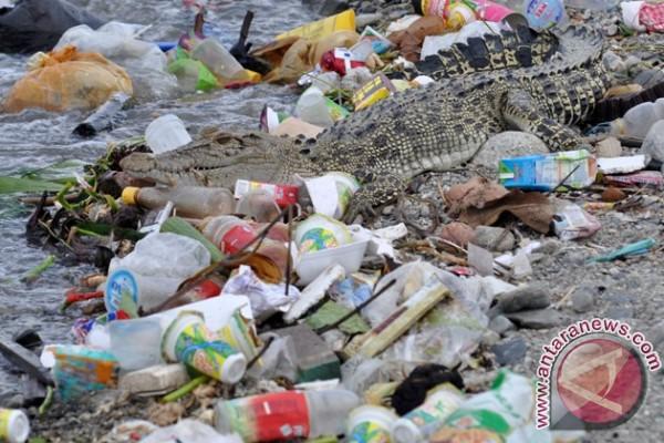 Buaya Sungai Palu berjemur di atas sampah