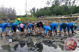 AAL Sudah Tanam 210.000 Mangrove di Mamuju Utara