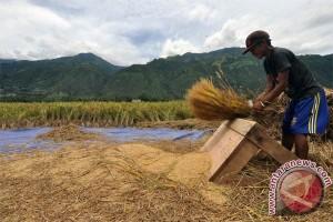 Luas Panen Padi Sulteng Capai 107.054 Hektar