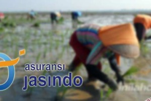 Jasindo Bayar Klaim Asuransi Padi Rp2,5 Miliar