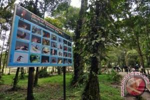 Objek Wisata Tambing Yang Memikat