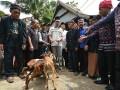 Ketua Umum Pengurus Besar (PB) Pergerakan Mahasiswa Islam Indonesia (PMII) Aminuddin Ma'ruf (tengah berkopiah) menyerahkan tiga ekor kambing kepada Ketua Adat Kamalisi di Palu, Sulawesi Tengah, Kamis (18/5). Lembaga Adat itu menyanksi Ketua Umum PB PMII itu berupa tiga ekor kambing dan 30 piring batu putih terkait pidatonya pada pembukaan Kongres ke-19 PMII yang dihadiri Presiden Joko Widodo Selasa (16/5) lalu yang menyebut tanah Tadulako (tanah adat masyarakat Kaili) sebagai daerah pusat gerakan Islam radikal dan pusat gerakan menentang NKRI dan menuai kecaman dari masyarakat setempat. (Foto: Antarasulteng.com/Basri Marzuki/17)