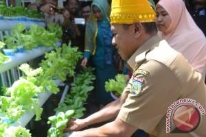 Wali Kota Panen Sayur Hidroponik