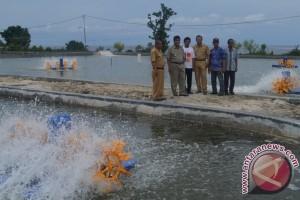 DKP Sulteng Investasi Rp10 Miliar Bangun Tambak Udang Supra Intensif