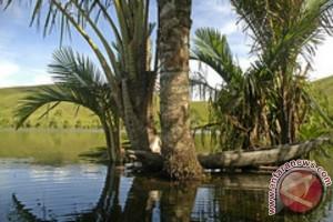 Masyarakat Palu Minta Hutan Sagu Dikonservasi