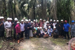 Mahasiswa Universitas Sidney Akui Perkebunan Sawit  Indonesia Berkelanjutan
