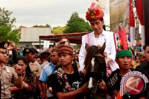 Presiden Jokowi dikirimi dua kuda jantan sandelwood