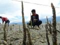 Sejumlah warga yang tergabung dalam Relawan Mangrove Tomini dan Mapala Santigi FisipUntad melakukan penanaman mangrove di Pantai Talise, Teluk Palu, Sulawesi Tengah, Senin (9/10). Penanaman mangrove itu dimaksu dkan untuk mencegah terjadinya abrasi di salah satu kawasan wisata itu sekaligus mempertahankan habitat biota laut di sekitarnya. ANTARASULTENG/Basri Marzuki