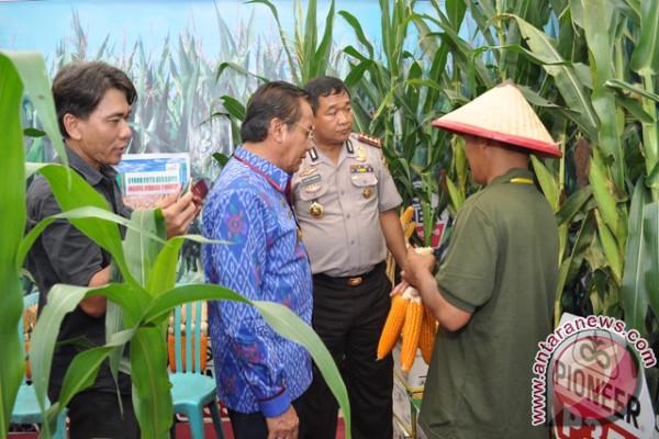 Sulteng Urutan Keempat Penghasil Jagung Di KTI
