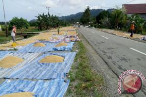 Petani Parimo  Menjemur Gabah Di Jalan