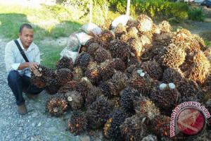 Legislator : Masyarakat Riopakava Butuh Kehadiran Pemerintah