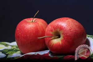 Menyantap apel dan tomat bantu perbaiki paru-paru pada bekas perokok