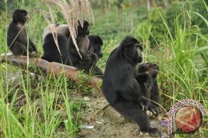 Pemkab Parimo Kembangkan Lima Objek Wisata