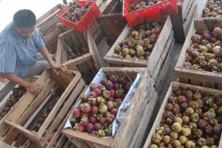 Akhirnya China bisa menerima ekspor manggis Indonesia