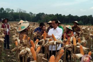 Presiden panen jagung dan tanah jati