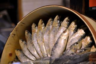 BPOM Palu cari produk ikan kaleng bercacing