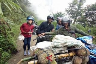 Petani Pinembani panen raya  durian
