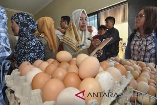 Harga telur di Palu terus melambung