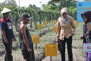 Petani di Palu rugi karena gagal panen