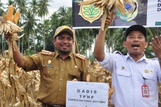 Petani Parigi Moutong realisasi 2.500 hektar tanaman Jagung