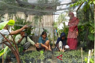 Faperta untad transfer teknologi budi daya buah naga ke petani