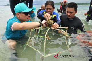 Pertamina bantu pulihkan karang rusak di Kepulauan Togean (vidio)