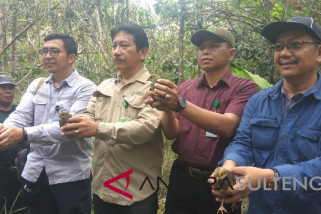 Penangkaran PT. DSLNG sudah lepasliarkan 68 anak burung maleo (vidio)