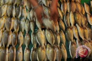 Harga Ikan Laut Di Kota Kendari Melonjak