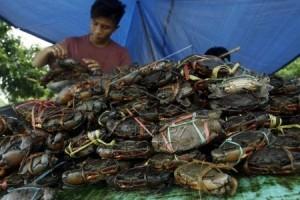 Harga kepiting bakau di Kendari Rp125.000/kg