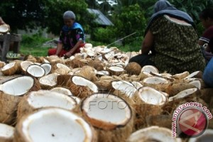 Petani kelapa di Sultra kembali bergairah