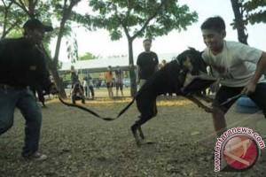Polda Sulsel Siagakan Anjing Endus Peredaran Narkoba