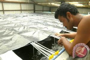DKP Sultra Produksi 15.000 Benur
