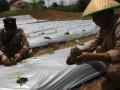 Pegawai Balai Karantina Pertanian Kelas II Kendari menanam tanaman cabai di Kendari, Sulawesi Tenggara, Kamis (23/2). Sebanyak 10.000 bibit pohon cabai berbagai jenis ditanam pegawai Kantor Balai Karantina Kelas II Kendari bersama puluhan pemuda yang tergabung Gerakan Pemuda Tani Indonesia (GEMPITA) guna mendukung usaha swasembada pangan. ANTARA FOTO/Jojon/aww/17.