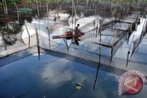 Legislator Dorong Buton Kembangkan Budi Daya Ikan